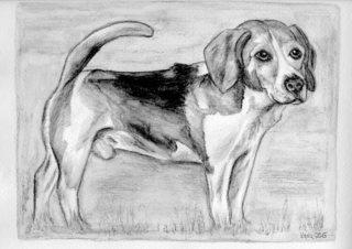 Sammy - Hund, Beagle, Haustier, Tier