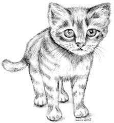 Katzenkind - Kätzchen, Katze, Haustier, Anlaut K, Illustration, Wörter mit tz
