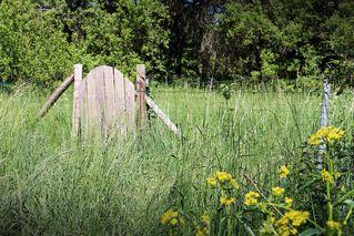 kleines Holztor im Frühling - Wald, Bäume, Tor, Holztor, Gitter, offen, verschlossen, Durchgang, Eingang, Eingang, Natur, verfallen, verwildert, Licht, Schatten, Sonne, Garten, Zaun, verschlossen, Schreibanlass, Fantasie, alt, Ruhe, ruhig, Vergänglichkeit, Vergangenheit, vergangen, Tür, Meditation, einhalten, Besinnlichkeit, besinnen, symbolisch, Pforte, allein, einsam, Rückzug, Alter, Frühling, Jahreszeit