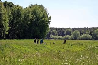 Familienausflug im Feuchtwiesengebiet - Spaziergang, spazieren, laufen gehen, erholen, Freude, bewegen, Spiel, spielen, ausgelassen sein, Frühling, Sommer, Pfingsten, Wiese, Feuchtwiese, entspannen, Natur, Impression, Schreibanlass, Ausflug, Freizeit, Hund, Hunde, Familie, Mutter, Urlaub, Bäume, Impuls, Wanderung, wandern, Weg, Wege, Umland, Land, Landschaft, landschaftlich, fröhlich