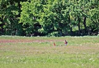 Spielzeit im Feuchtwiesengebiet - Spaziergang, spazieren, laufen gehen, erholen, Freude, bewegen, Spiel, spielen, ausgelassen sein, Frühling, Sommer, Pfingsten, Wiese, Feuchtwiese, entspannen, Natur, Impression, Schreibanlass, Ausflug, Freizeit, Kind, Familie, Mutter, Urlaub, Bäume, Impuls, Wanderung, wandern, Weg, Wege, Umland, Land, Landschaft, landschaftlich, fröhlich
