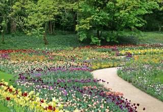 Frühlingsimpressionen - Park, Parkanlage, Beet, Blumen, Frühling, Frühblüher, Tulpen, Tulpe, bunt, Blumenbeet, Zwiebel, Blumenzwiebel, viele