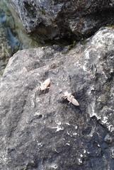 Libellenlarven - Libelle, Larve, Hülle, schlüpfen, Entwicklungsstadium