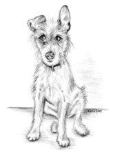 Balou - Jack Russell Terrier - Hund, Haustier, Tier, Jack Russell Terrier, Anlaut H, Illustration
