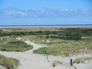 Dünenlandschaft an der Nordsee - Düne, Wattenmeer, Meer, Nordsee, Küstenschutz, Pionierpflanzen