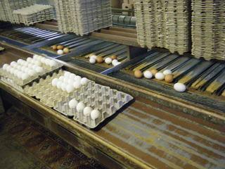 Hühnerhof #2 - Eier, Hühnerhof, Güteklasse, Gewicht, Verpackung, sortieren, verpacken, Mathematik, Einmaleins