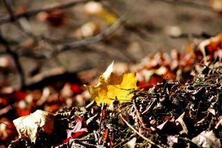erste Herbstboten #4 - Herbstfarben, Herbst, Blattfärbung, Sonne, Himmel, Herbstlaub, Laub, Blätter, bunt, Jahreszeit, Ahorn, Sonne, Impression, Meditation, Hintergrund, Stimmung, Farbenspiel, Farbe, Oktober, Blatt