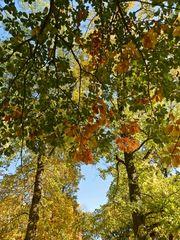 Herbstboten #6 - Herbstfarben, Herbst, Blattfärbung, Sonne, Himmel, Herbstlaub, Laub, Blätter, bunt, Jahreszeit, Eiche, Kastanie, Sonne, Impression, Meditation, Hintergrund, Stimmung, Farbenspiel, Farbe, Oktober
