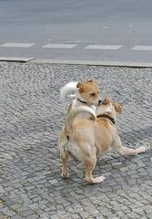 Tierbekanntschaften - Hunde, Haustier, Menschenfreund, Kommunikation, kommunizieren, tierisch, Hund, Verhalten