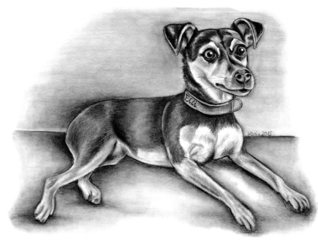 Mixhündin Elli - Hund, Haustier, Tier