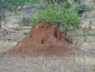 Termitenhügel#2 - Afrika, Savanne, Serengeti, Termiten, Erdnest, Wärmespeicherung, Termitenbau, Termitenhügel, Klimaregulation, Schutz vor Fressfeinden, Tierbehausung