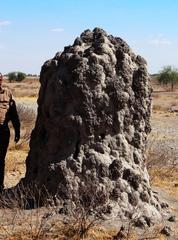 Termitenhügel#3 - Afrika, Savanne, Termiten, Erdnest, Wärmespeicherung, Termitenbau, Termitenhügel, Klimaregulation, Schutz vor Fressfeinden, Tierbehausung