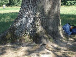 Schätzaufgabe Baumumfang - Mathematik, schätzen, Gruppenarbeit, Baum, Umfang, offene Aufgabe