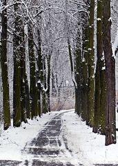 Allee im Winter - Winter, Schnee, Bäume, Weg, Ruhe, Allee, geräumt, verschneit, unbelaubt, kalt, Impulsbild, winterlich, Fluchtpunkt, Perspektive