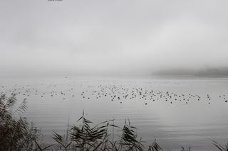 Morgenstimmung am Bodensee - Bodensee, Morgenstimmung am See, Ruhe, Stille, Nebel, Meditation