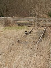 Katze am Gleis #1 - Gleis, Verkehr, Eisenbahn, Weg, Wege, Fahrbahn, Schienen, Schwelle, parallel, Spurweite, Gleiskörper, Gleisbett, Katze, warten, Ruhe, Natur, Perspektive, Erzählanlass, gerade, verwachsen, Meditation, Fluchtpunkt, eingleisig