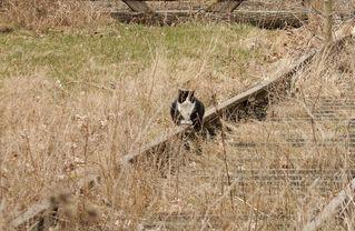 Katze am Gleis #2 - Gleis, Verkehr, Eisenbahn, Weg, Wege, Fahrbahn, Schienen, Schwelle, parallel, Spurweite, Gleiskörper, Gleisbett, Katze, warten, Ruhe, Natur, Perspektive, Erzählanlass, gerade, verwachsen, Meditation, Fluchtpunkt, eingleisig