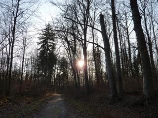 Sonnenuntergang im Wald - Sonnenuntergang, Abend, Meditation, Horizont, Himmelserscheinung, Sonne, Bäume, Wolken