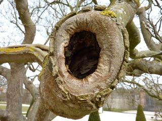Baumhöhle - Baum, Baumstamm, hohl, Baumhöhle, Unterschlupf, Winterquartier, Brutplatz