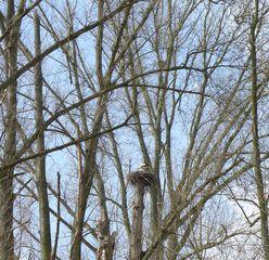 Storchennest #1 - Storch, Nest, Brutstätte, Adebar, Vogel, Schreitvogel, Zugvogel, Weißstorch, Brutplatz, Storchennest