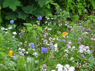 Wildblumen#1  - Sommer, Blumenwiese, Wildblumen, Wiese, Blumen, Blüten, Gräser, Unkraut, grün, blühen, Natur, Kräuter