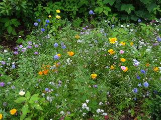 Wildblumen #2 - Sommer, Blumenwiese, Wildblumen, Wiese, Blumen, Blüten, Gräser, Unkraut, grün, blühen, Natur, Kräuter