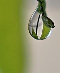 Tropfen - Tropfen, Wasser, Wassertropfen, flüssig, Impression, Wetter, Niederschlag, Physik, Zustandsänderung, Jahreszeit, Aggregatzustand, Regentropfen, Oberflächenspannung, Kohäsion, Zusammenhangskraft, Regen, kugelförmig, Flüssigkeit, spritzer, spritzen, drop, nass tropfnass, Optik