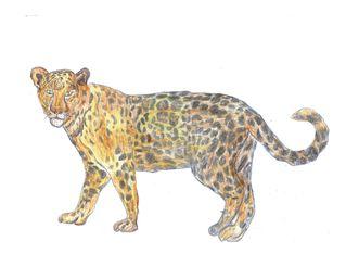 Jaguar - Raubtier, Großkatze, Amerika, gefährdete Tierart, Unze, Onze, Onza