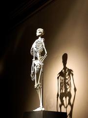 Skelett der aufrecht stehende Mensch - Skelett, Mensch, Biologie, Licht, Schatten, Ethik, Knochengerüst, Knochen, Naturkunde, Natur, Evolution