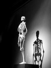 Skelett der aufrecht stehende Mensch sw - Skelett, Mensch, Biologie, Licht, Schatten, Ethik, Knochengerüst, Knochen, Naturkunde, Natur, Evolution