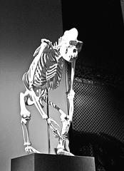 Skelett Primat sw - Skelett, Primat, Biologie, Licht, Schatten, Ethik, Knochengerüst, Knochen, Naturkunde, Natur, Evolution, Affe, Gorilla
