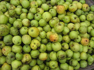 Äpfel - Apfelsaft pressen #1 - Apfel, Oktober, Ernte, Herbst, Apfelsaft, Obst, grün, naturbelassen
