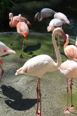Flamingo - Flamingo, Zoo, Tierpark, Vogel, Gefieder, rosa, Schnabel