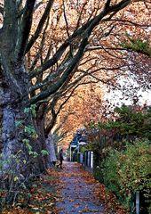 Herbstputz - Bäume, Pflanze, Natur, Farbspiel, Farbzauber, Schreibanlass, dunkel, herbstlich, bunt, Herbst, Färbung, Laub, Laubbaum, Impression, Platane, Allee, Weg