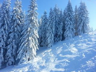 Wintertraum - Schnee, Winterwald, Skipiste, Winter, Frost, Eis, Wasser, Schnee, frieren, gefroren, Dichte, Physik, Aggregatzustand, kalt, Impression, Jahreszeit, Wettererscheinung, Licht, Schatten, kalt, Kälte, winterlich, frostig, schneien, Tanne, immergrün