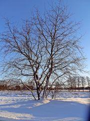 Baum im Winter - Winter, Schnee, Winterspuren, kalt, Kontrast, Licht, Januar, Baum, Jahreszeit, Wettererscheinung, Kunst, HSU, Natur