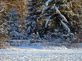 Winterlandschaft mit Tor - Winterlandschaft, Winter, Schnee, kahl, Baum Bäume, Sonne, Schneelandschaft, Kälte, weiss, kalt, sonnig, eisig, Nadelbaum, Tor, Neuschnee, verschneit, schneebedeckt, Einsamkeit, Ruhe, Stille, Schreibanlass, Meditation, Kunst, HSU, Wald, Gitter, verschlossen, Durchgang, Eingang, Ausgang, Natur, Licht, Schatten, Sonne, Zaun, verschlossen, Fantasie, ruhig, Januar, Vergänglichkeit, allein, einsam, Rückzug, Jahreszeit