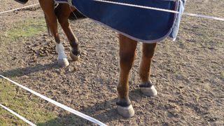 Dösendes Pferd - Pferd, Huf, schlafen, dösen, Döshaltung, Schildern