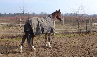 Pferd nach dem Aufwachen - Pferd, Huf, strecken, Gymnastik