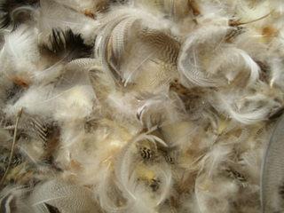 Oberfläche mit Federn - Feder, Federn, Oberfläche, Struktur, Keratin, Schutz für Vögel, Tarnung