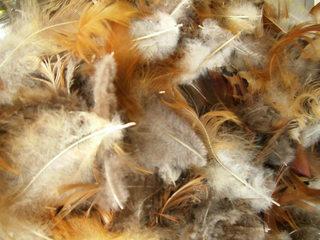 Oberläche mit Federn - Feder, Federn, Oberfläche, Struktur, Keratin, Schutz für Vögel, Tarnung