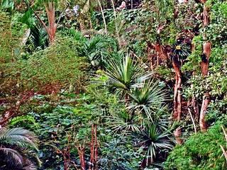 Urwald - Dschungel, Regenwald, Tropen, Vegetation, wachsen, Natur, Bewuchs, Wald, Urwald, Blattwerk, Blatt, Blätter, Pflanzen, urwüchsig