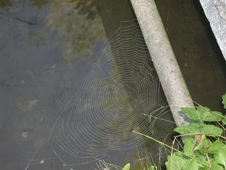 Spinnennetz - Spinnennetz, Herbst, Wasser, Tier, Spinne, Netz, Radnetz, Grafik, Gespinst, Beutefang