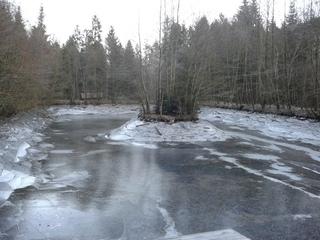 Zugefrorener, wasserleerer Fischteich - Teich, Fischteich, Fischzucht, Wald, Winter, Ufer, bewachsen, Eis, Frost, frostig, zugefroren, Gefrierpunkt, Anomalie, Physik