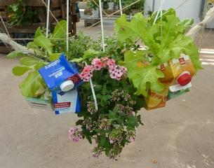 Urbaner Gartenbau - Urbaner Gartenbau, Urban gardening, Methode im Gartenanbau, kleinräumig, gärtnerische Nutzung