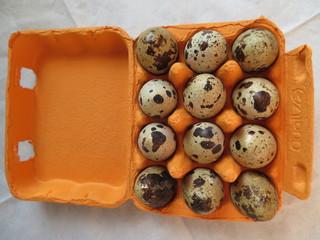 Wachteleier - Eier, Wachteln, essen, klein, Nahrungsmittel, Tarnfarben, gesprenkelt, Delikatesse, intensiver Geschmack, Zwölf