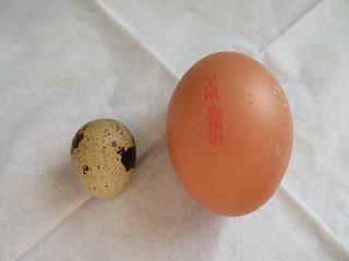 Wachtelei/Hühnerei - Größenvergleich - Wachtel, Ei, Huhn, klein, groß, Nahrungsmittel, Einmaleins