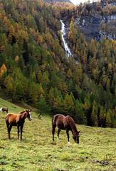 Zwei Einhörner - Einhorn, Horn, Pferd, Fabel, Wesen, Märchen, Fabelwesen, fantastisch, Fantasie, Phantasie