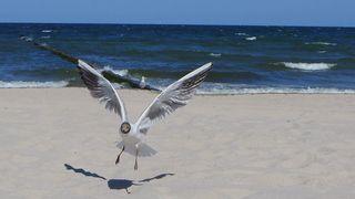 Möwe - Möwe, Wasservogel, Vogel, fliegen, Abflug