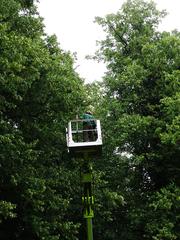 Baumpflege - Baum, Bäume, Baumpflege, öffentlich, Sicherheit, Ast, Äste, Zweige, Blätter, Blattwerk, Wald, Verkehrssicherungspflicht